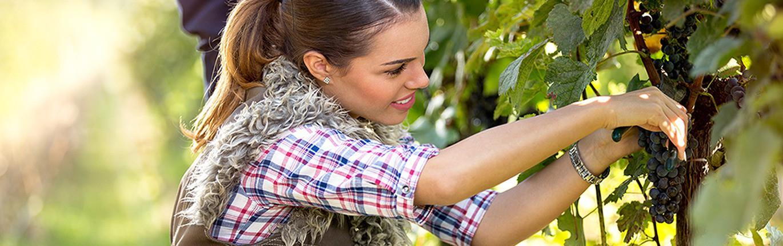 Une sélection 100% indépendante Venant de vignerons passionnés en France et à l'étranger.